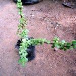 Jed Plant